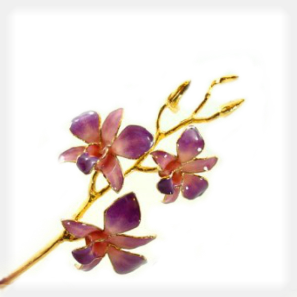 Lilac to Pink Orchid Trimmed in 24k Yellow Gold by Forever Rose