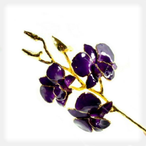 Deep Purple Orchid Trimmed in 24k Yellow Gold by Forever Rose