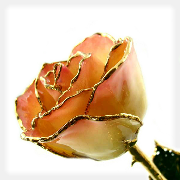 White to Pink Forever Rose Trimmed in 24k Yellow Gold
